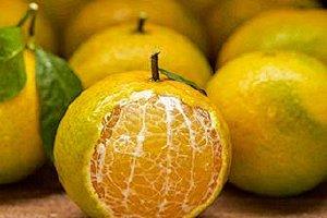橘子和桔子的差别,橘子和柑子是一种新鲜水果吗缩略图