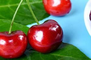 车里子和草莓苗能够一起吃吗,车里子和吃什么水果相冲缩略图