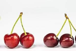 车里子能够和牛油果一起吃吗,车里子和牛油果一起吃的益处缩略图