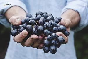冰冻葡萄怎么做 葡萄和什么榨汁好喝缩略图