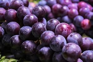吃完虾可以吃葡萄吗,虾和葡萄一起吃会怎样缩略图