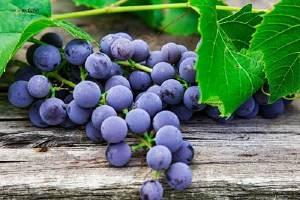 来月经可以吃葡萄吗 经期吃葡萄的好处缩略图