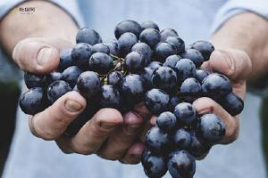葡萄变硬了还能吃吗 葡萄裂开了是怎么回事缩略图