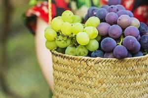 新鲜葡萄怎么保鲜 葡萄怎么保存时间长缩略图