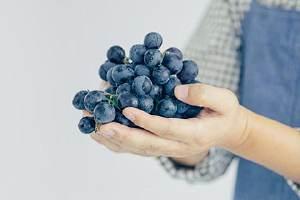 夏黑葡萄多少钱一斤,夏黑和巨峰哪个品种好缩略图