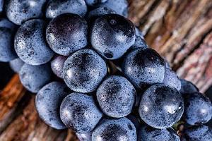 夏黑是葡萄还是提子,夏黑葡萄怎么剥皮缩略图