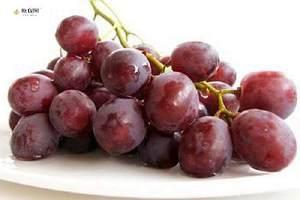 吃了葡萄能不能喝水,葡萄和水能一起吃吗缩略图