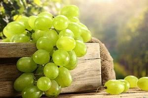 吃葡萄会胖吗,吃葡萄会长胖吗,吃葡萄会不会胖缩略图