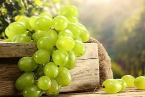 早上空腹吃葡萄好吗,早上空腹吃葡萄可以吗,早上空腹吃葡萄好不好缩略图