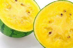 黄肉的西瓜叫什么瓜,黄心西瓜是否转基因水稻的缩略图