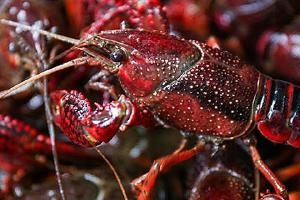 吃了虾多长时间可以吃榴莲,吃龙虾和榴莲中毒了该怎么办缩略图