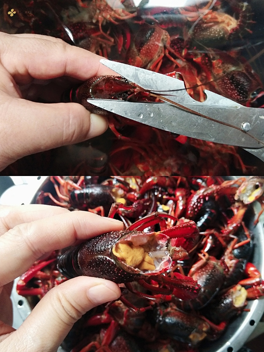 《忘不了餐厅》同款-黄渤同款麻辣小龙虾的做法 步骤2