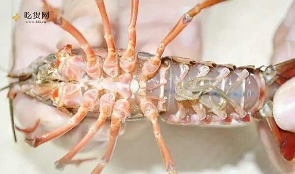 吃了后会吮指的麻辣小龙虾的做法 步骤1