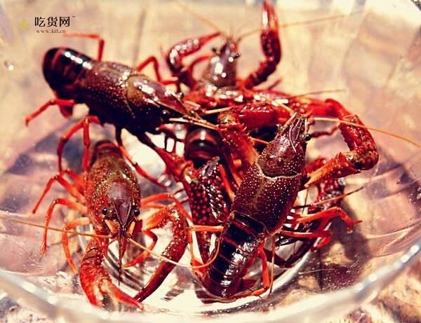 香辣(麻辣)小龙虾(配有清理小龙虾方法)的做法 步骤1