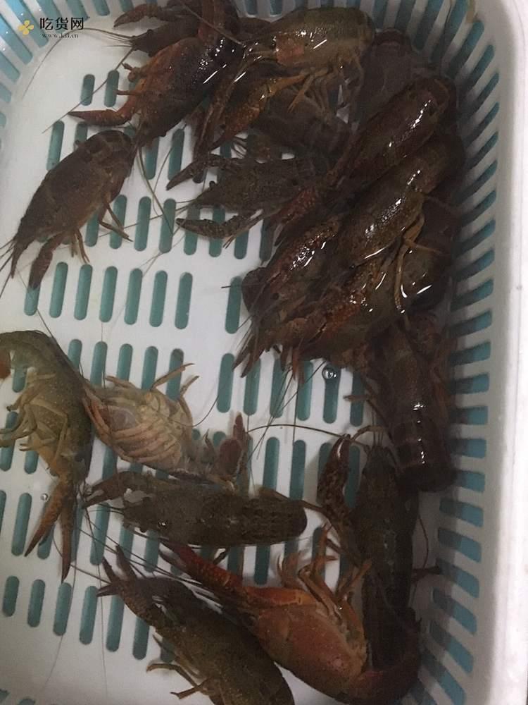 小白麻辣小龙虾做法的做法 步骤1