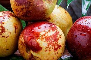 红枣蒸多长时间最好,枣为什么三蒸三凉缩略图