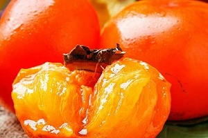 柿子和什么不能一起吃,柿子为什么不能和酸奶一起吃缩略图