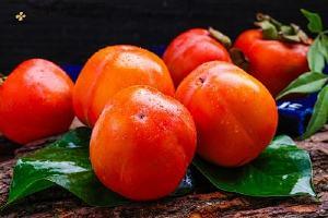 柿子可以和酒一起吃吗,吃了柿子喝酒会怎么样缩略图