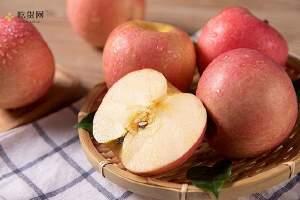 冰糖心苹果有什么营养,吃冰糖心苹果有什么好处缩略图