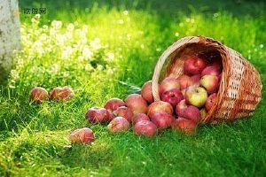 吃苹果可以减肥吗 不仅可以减肥还有助于健康缩略图
