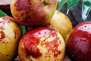 冬枣一般什么时候成熟,冬枣什么时候吃最好缩略图