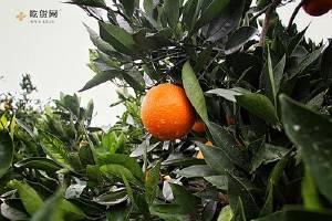 草莓弄到衣服上怎么洗,如何去掉衣服上橙子汁缩略图