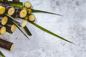 甘蔗冬天怎么吃效果好,甘蔗冰糖雪梨止咳吗缩略图