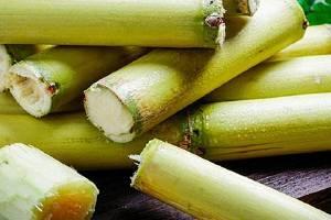 甘蔗的热量高不高,甘蔗的热量有多少呢缩略图