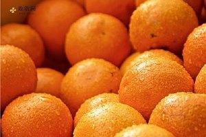 如何挑选橙子,经期能吃橙子吗缩略图