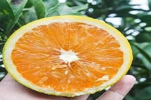 吃橙子可以减肥吗,橙子热量是多少缩略图