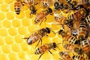 蜂蜜和龙眼可以同吃吗,蜂蜜不可以和什么同食缩略图