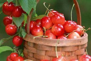 樱桃吃了有什么好处 樱桃的适用人群与禁忌人群缩略图