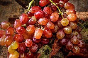 提子是葡萄的一种吗,怎么分辨提子和葡萄缩略图