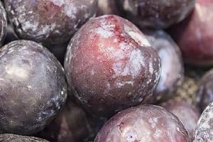 黑布林要软了才能吃吗,黑布林酸的就是没熟吗缩略图