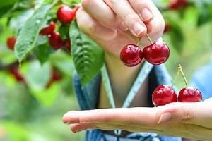 吃樱桃的禁忌有哪些,减肥期间晚上能吃樱桃吗缩略图