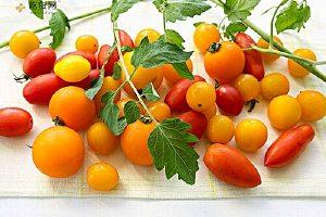 圣女果和西红柿的区别,圣女果和西红柿有什么却别缩略图