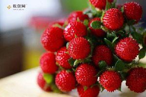 野草莓孕妇能吃吗,孕妇能吃野草莓吗,野草莓孕妇可以吃吗缩略图