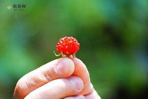孕妇能吃野草莓吗 孕妇吃野草莓有什么好处缩略图
