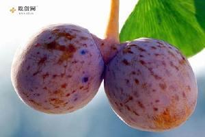 银杏果有毒吗 银杏果吃多少会中毒缩略图