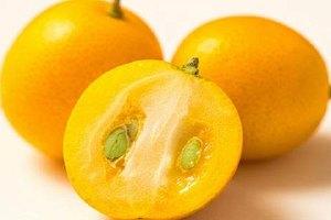 金桔的籽能吃吗,无籽金桔是转基因吗缩略图