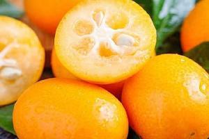金桔直接吃能止咳吗,金桔怎样吃治疗咳嗽最佳缩略图