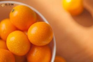 金桔怎么吃好吃,金桔怎么做最好吃缩略图