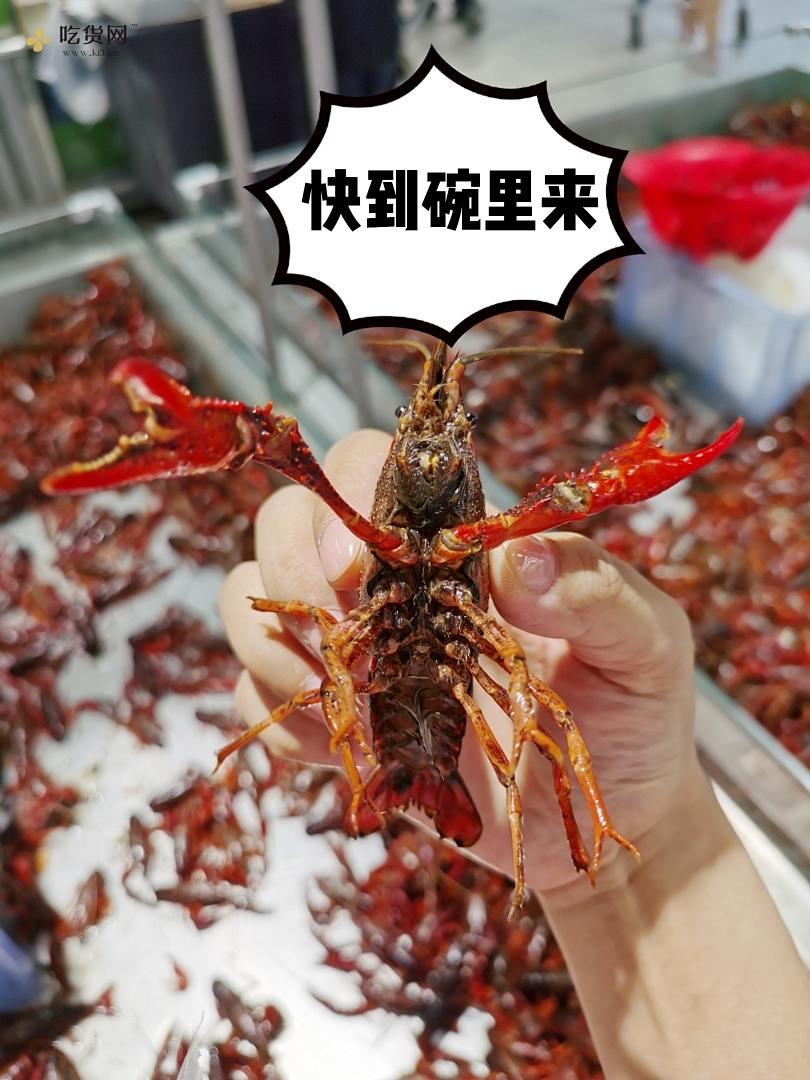 麻辣/蒜蓉小龙虾的做法 步骤1