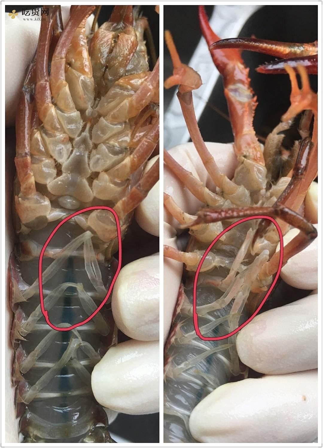 详解如何清理以及辨别小龙虾的做法 步骤2