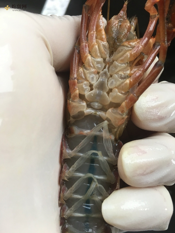 详解如何清理以及辨别小龙虾的做法 步骤1